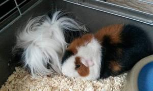 Gilly Zoo - Petits mammifères