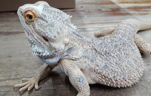 Gilly Zoo - Reptiles